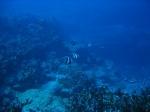 mauritius-038
